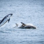 Reykjavic Adventures – Whale Watching & The Blue Lagoon