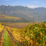 Piemonte Food and Wine Tour [Part 1]