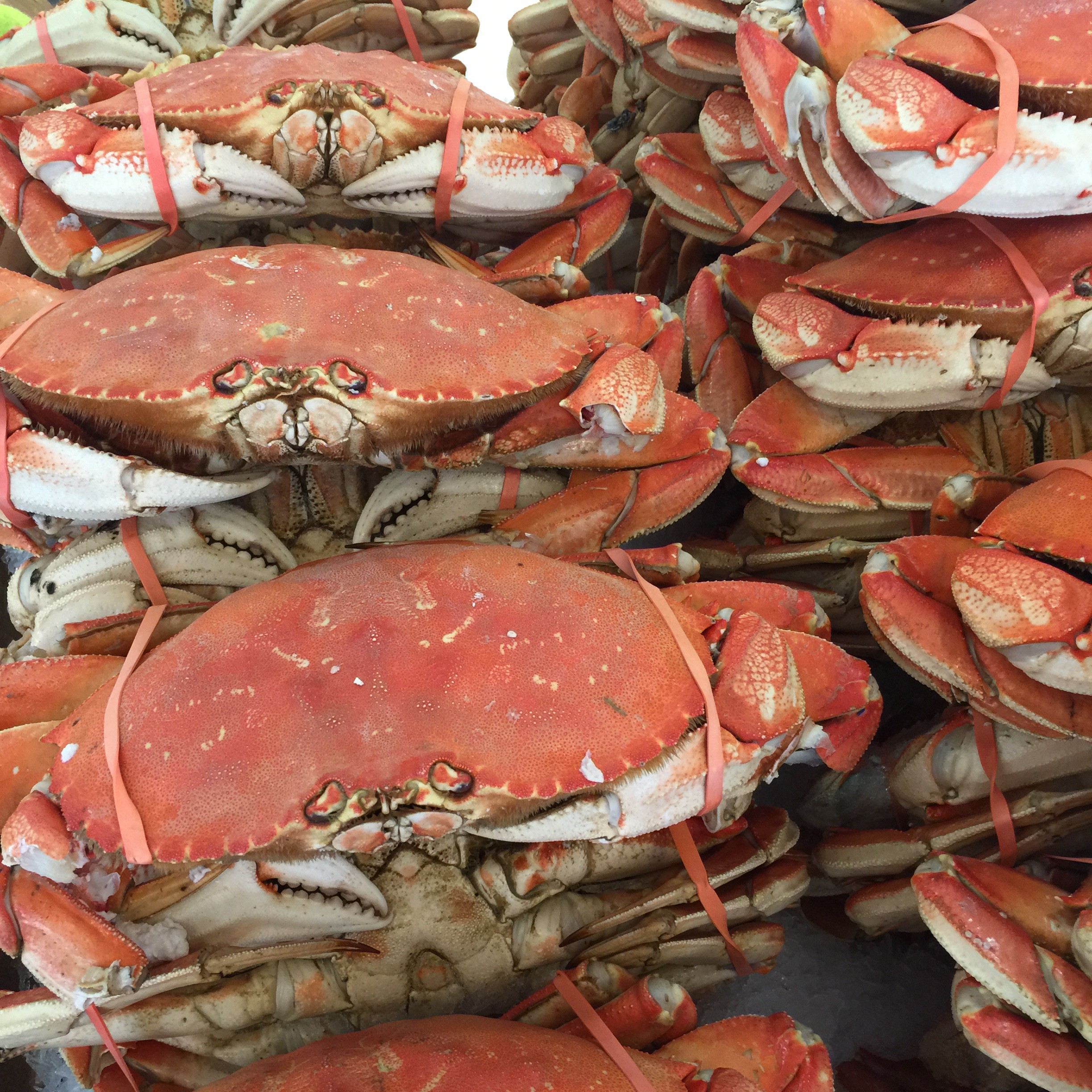 The dungeness crab are huge!