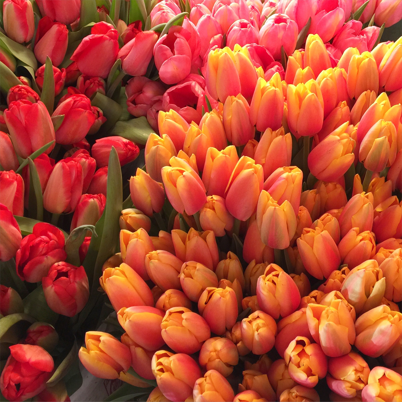 Fresh tulips at the market