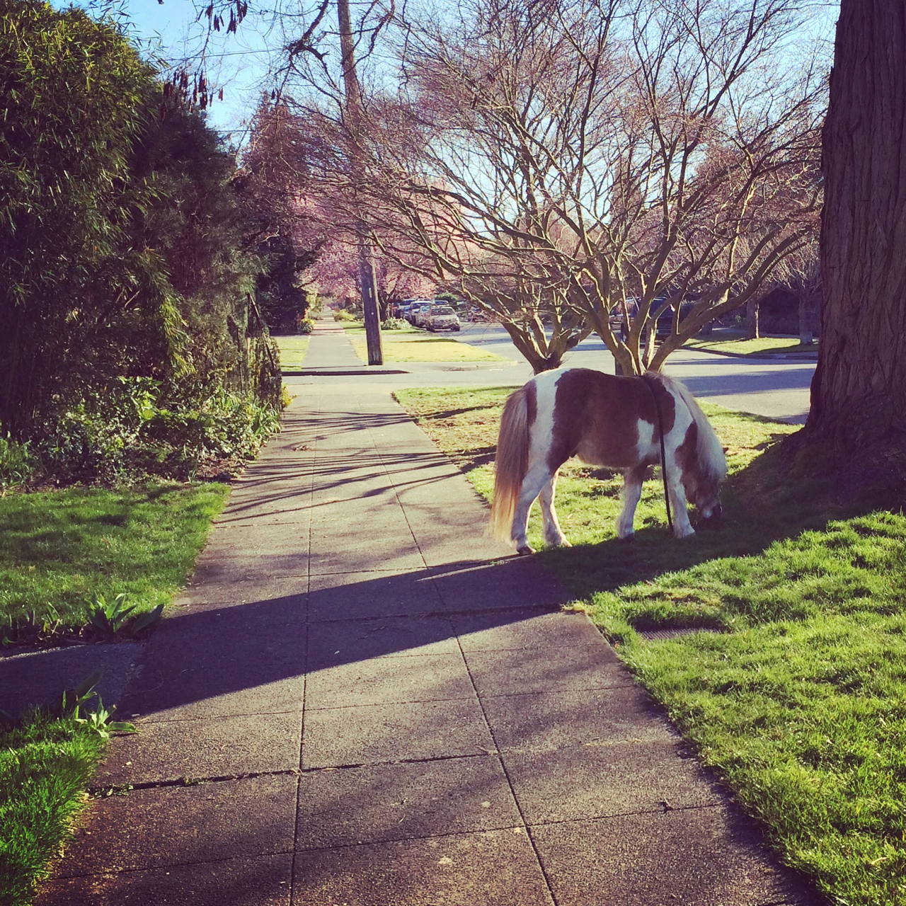 Jeb, the local horse (in miniature)