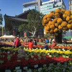 Jogyesa Temple garden filled with chrysanthemums