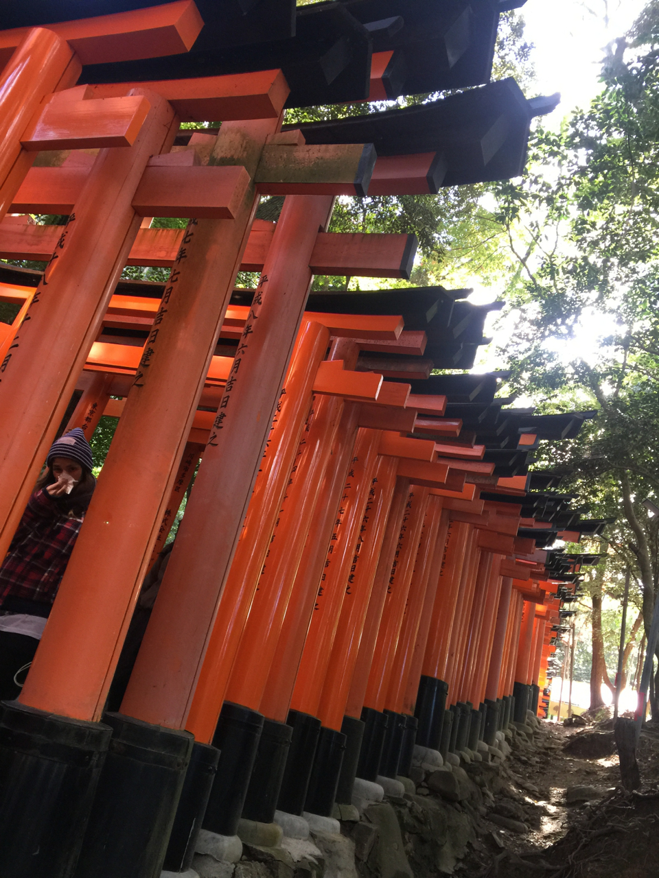 The torii gates from outside of the path